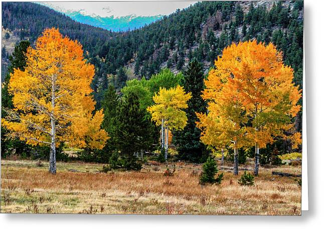 Fall Trees Greeting Card by Juli Ellen