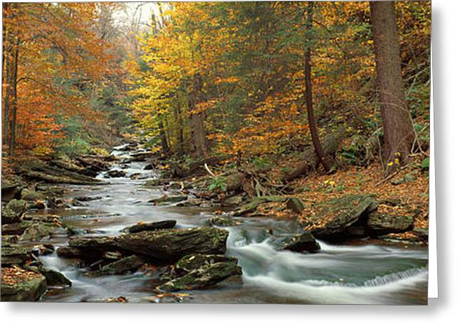 Fall Trees Kitchen Creek Pa Greeting Card by Panoramic Images