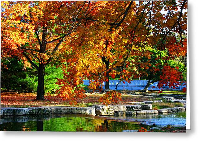Fall Trees Landscape Stream Greeting Card