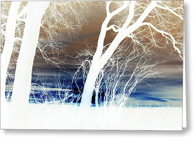 Greeting Card featuring the photograph Fall Trees by Larry Campbell