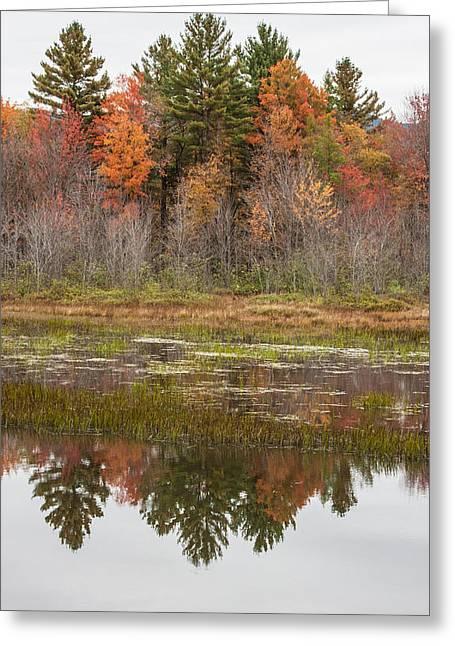 Fall Trees Reflected In Lake Chocorua Greeting Card by Karen Stephenson