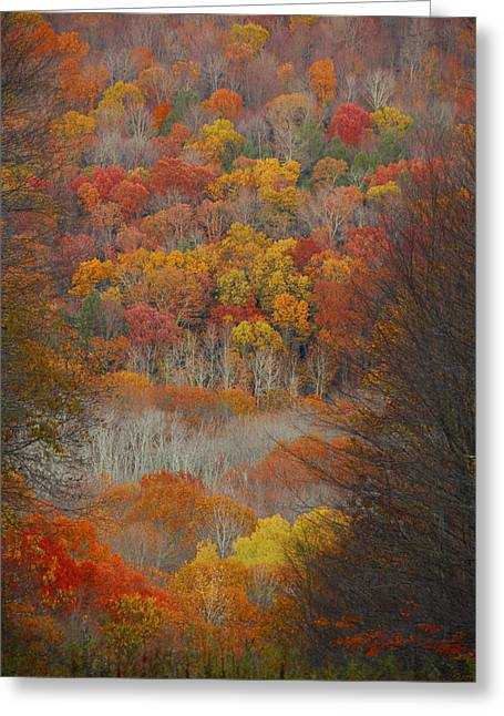 Fall Tunnel Greeting Card