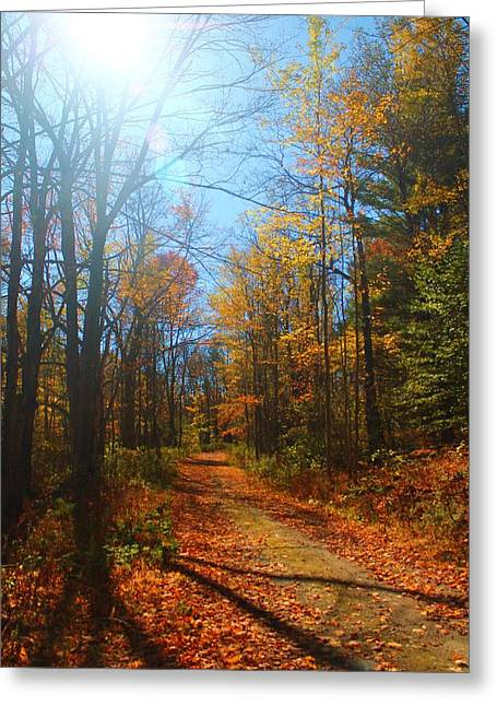 Fall Vermont Road Greeting Card by Alicia Knust