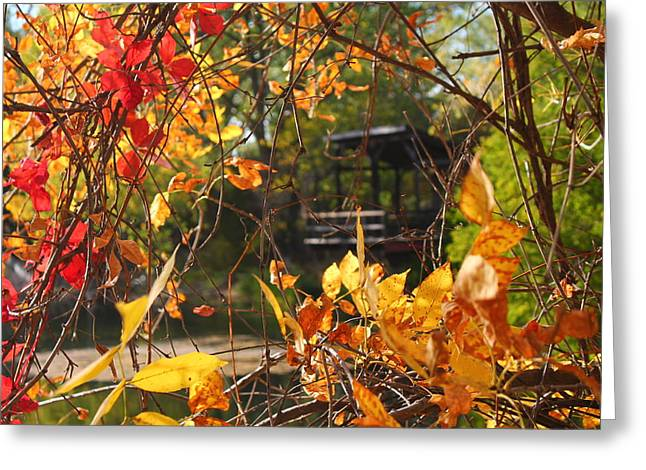 Greeting Card featuring the photograph Fall View by Alicia Knust