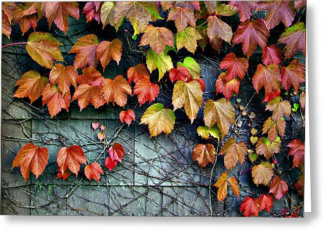 Fall Wall Greeting Card by Kjirsten Collier