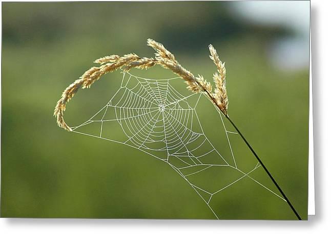 Fall Web Greeting Card by Annie Pflueger