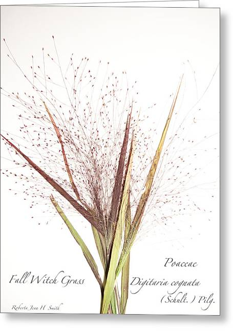 Fall Witch Grass Greeting Card