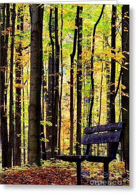 Fall Woods In Michigan Greeting Card