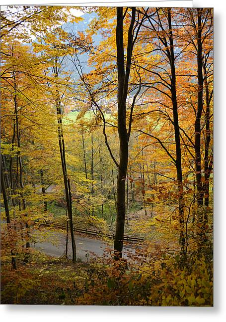 Fall Woods Greeting Card by Marie Sullivan