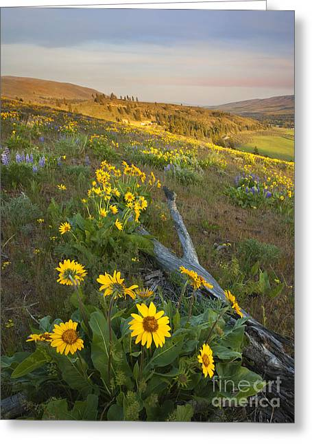 Fallen In Paradise Greeting Card by Mike  Dawson