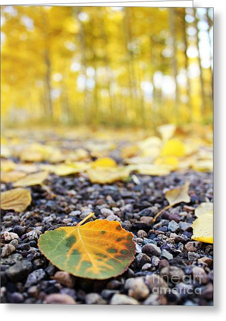 Fallen Leaf Greeting Card