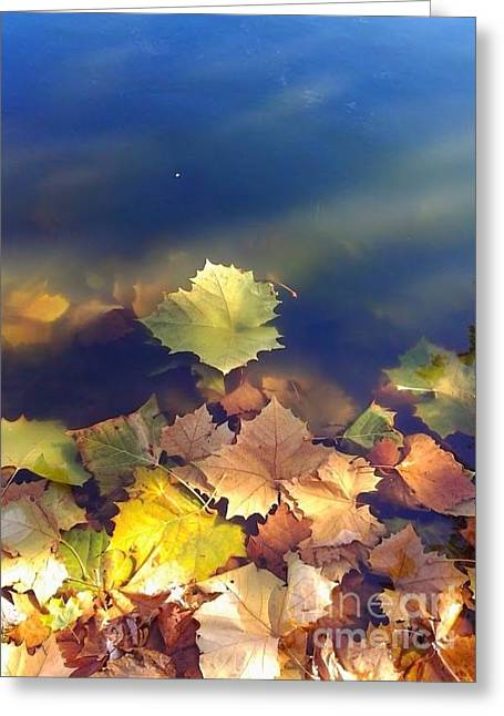 Fallen Leaf Greeting Card by Susan Townsend