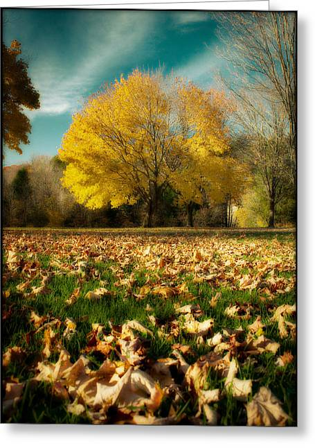 Fallen Leaves Greeting Card by Cindy Haggerty