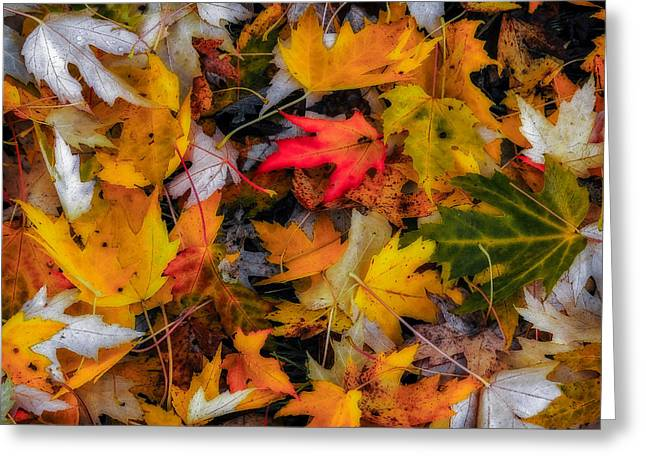 Fallen Leaves Greeting Card