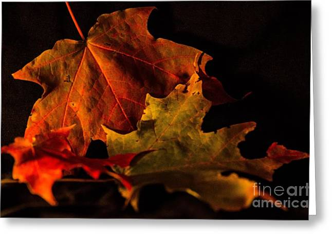 Fallen Leaves Greeting Card by Judy Wolinsky