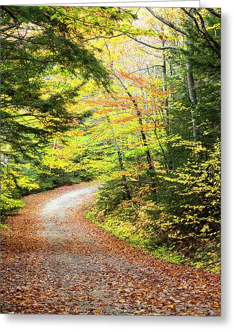 Fallen Leaves Litter A Forest Road Greeting Card by Robbie George