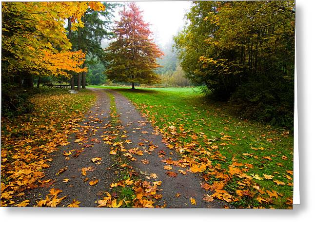 Fallen Leaves On A Road, Washington Greeting Card by Panoramic Images