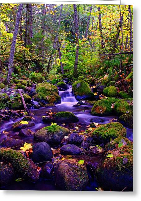 Fallen Leaves On The Rocks Greeting Card