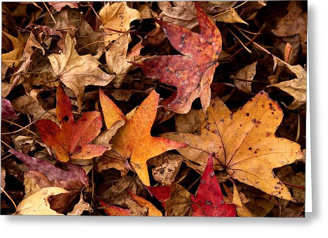 Fallen Leaves Greeting Card by Rebecca Davis