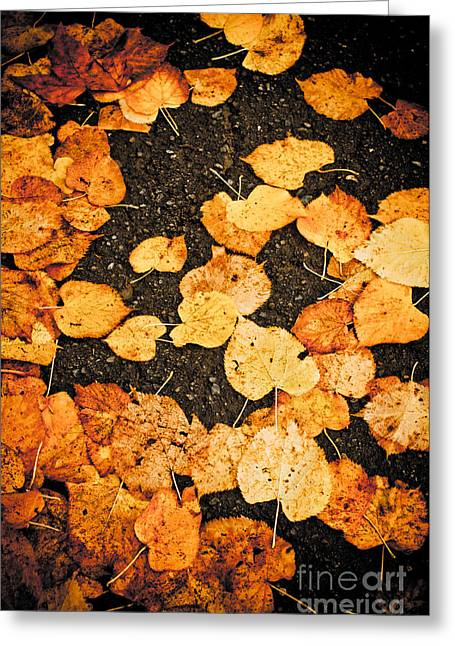 Fallen Leaves Greeting Card by Silvia Ganora