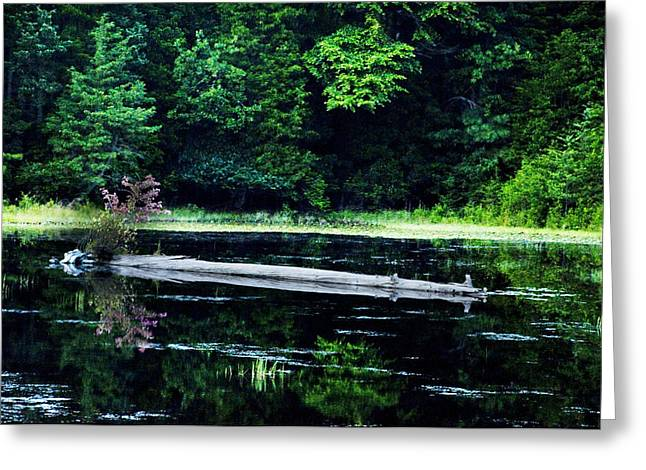 Fallen Log In A Lake Greeting Card by Bill Cannon