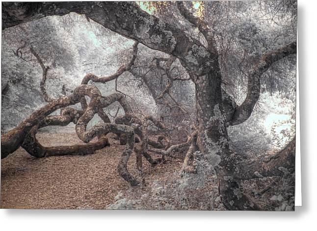 Fallen Oak Greeting Card by Jane Linders
