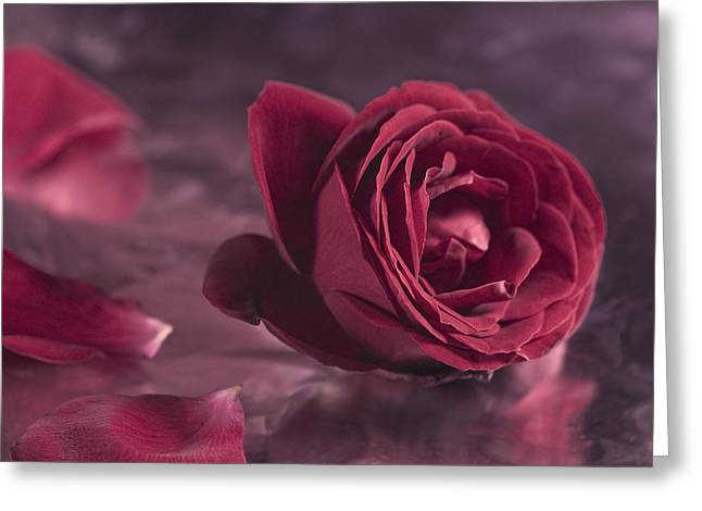 Greeting Card featuring the photograph Fallen Petals by Trevor Chriss