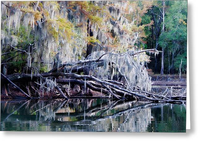Greeting Card featuring the photograph Fallen Reflection by Lana Trussell