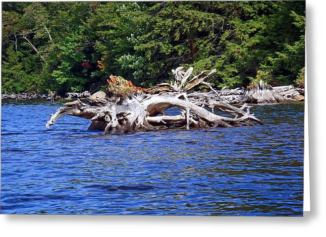 Fallen Tree In A Lake Greeting Card