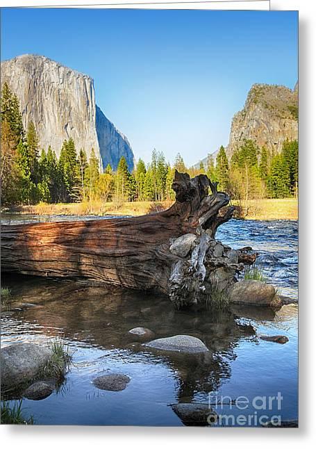 Fallen Tree In Merced River Greeting Card