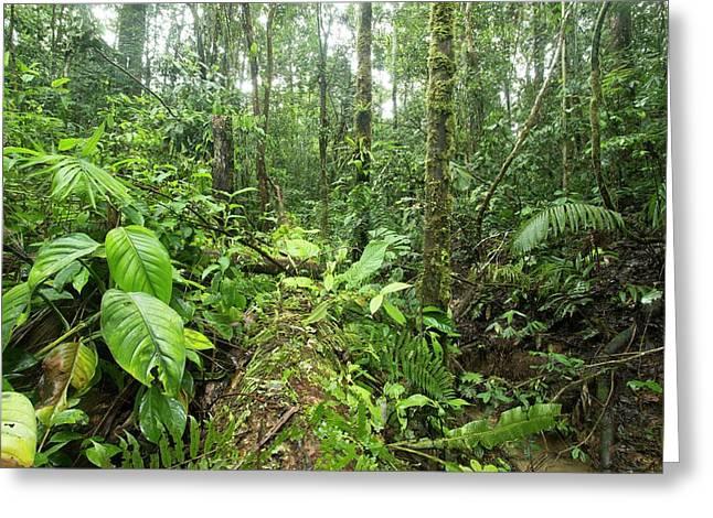 Fallen Tree In Rainforest Greeting Card
