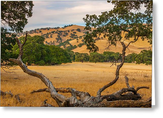 Fallen Tree With A View Greeting Card
