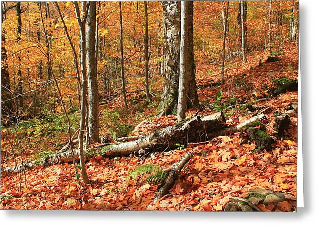 Greeting Card featuring the photograph Fallen Trees by Alicia Knust