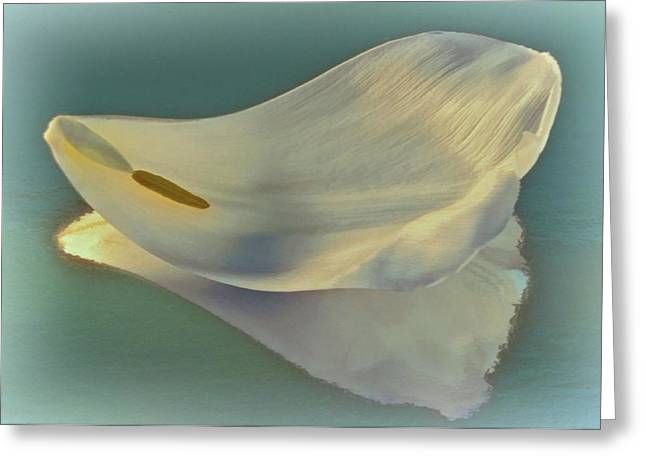 Fallen White Petal On Aqua Greeting Card