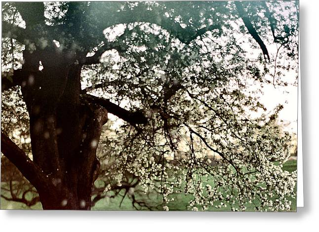 Falling Blossoms Greeting Card