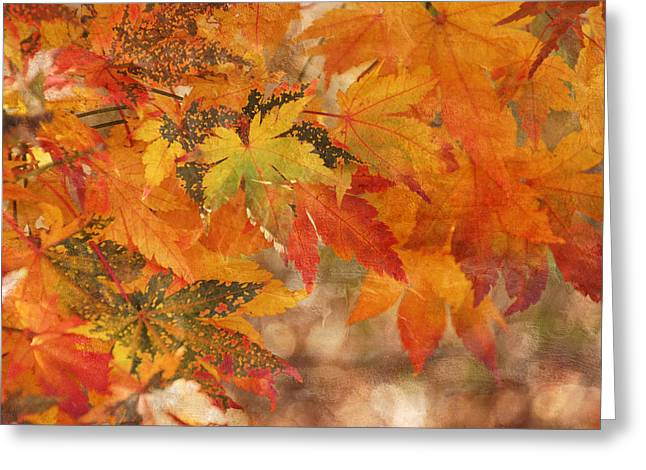 Falling Colors I Greeting Card