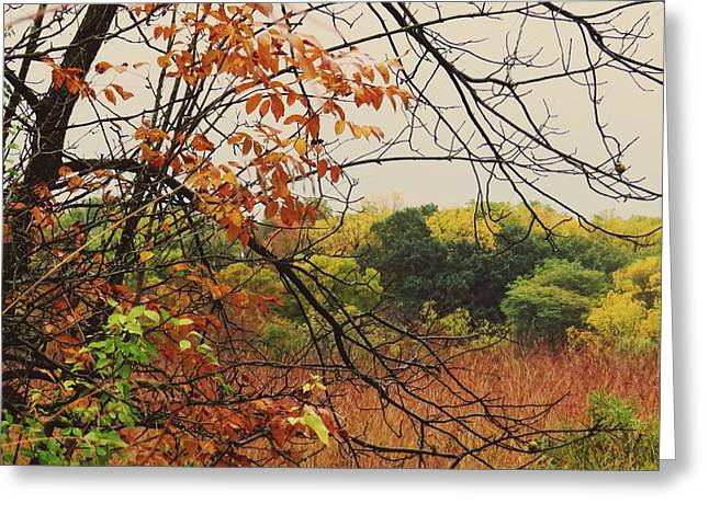 Falling Colors Greeting Card by Nikki McInnes