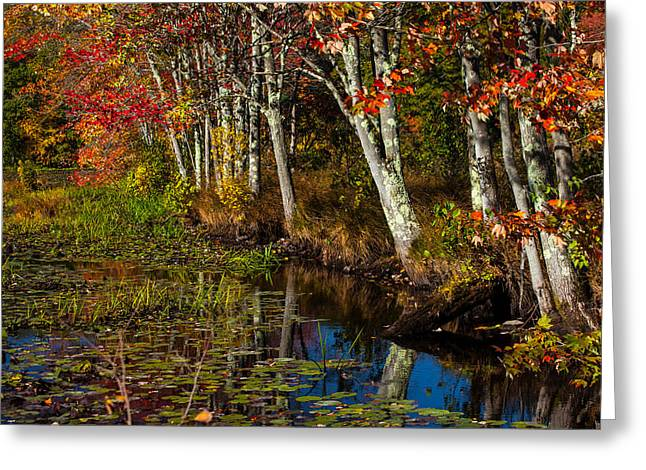 Falling Into The Colors Greeting Card by Karol Livote