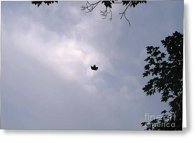 Falling Leaf Aka Lucky Shot Greeting Card by Melissa Stoudt