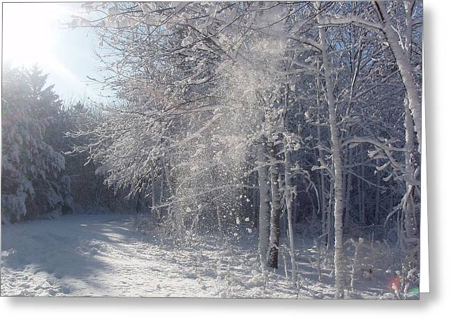 Greeting Card featuring the photograph Falling Snow by Teresa Schomig
