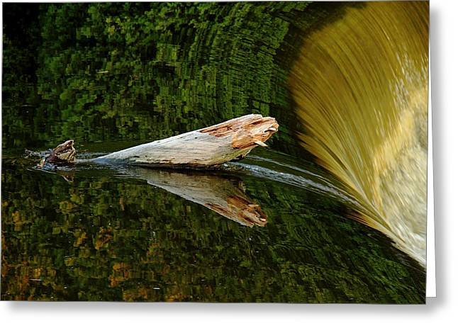 Falling Tree Reflections Greeting Card by Debbie Oppermann