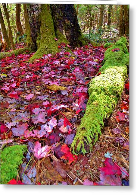 Fall's Carpet Greeting Card