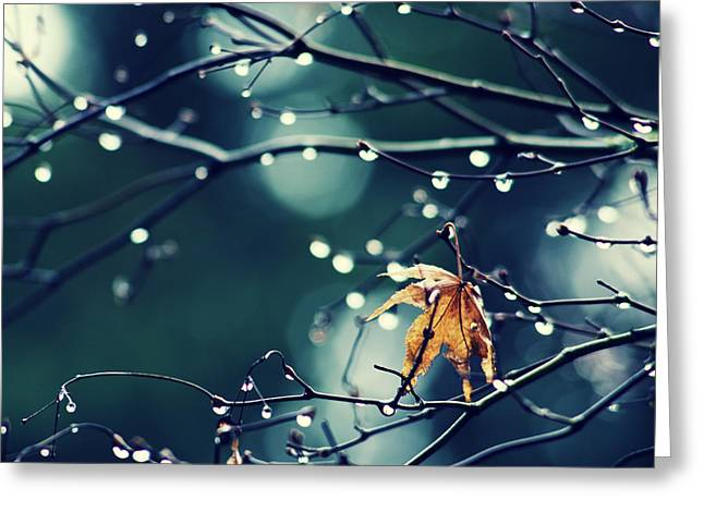 Greeting Card featuring the photograph Fall's Last Leaf - Hipster Photo Square by Charmian Vistaunet