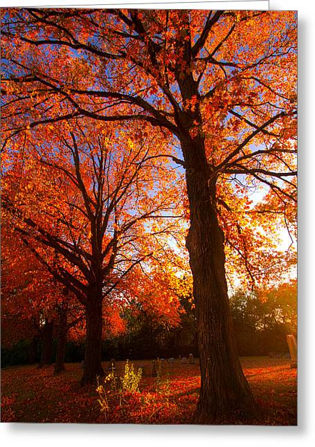 Fall's Splendor Greeting Card