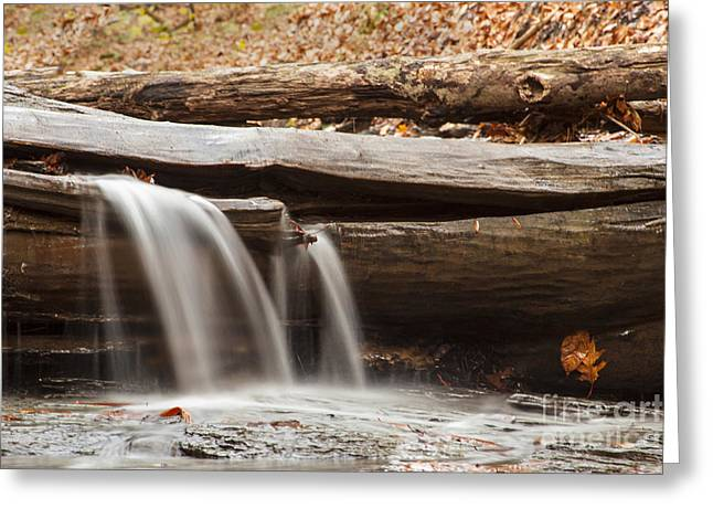 Falls Through A Tree Greeting Card by Darleen Stry