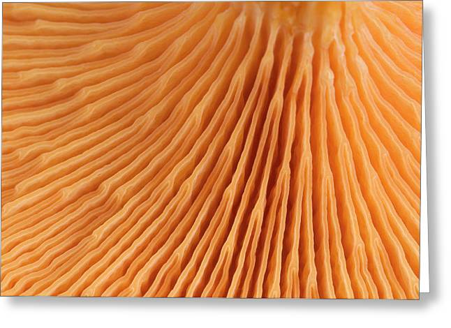 False Chanterelle Gills Abstract Greeting Card by Nigel Downer
