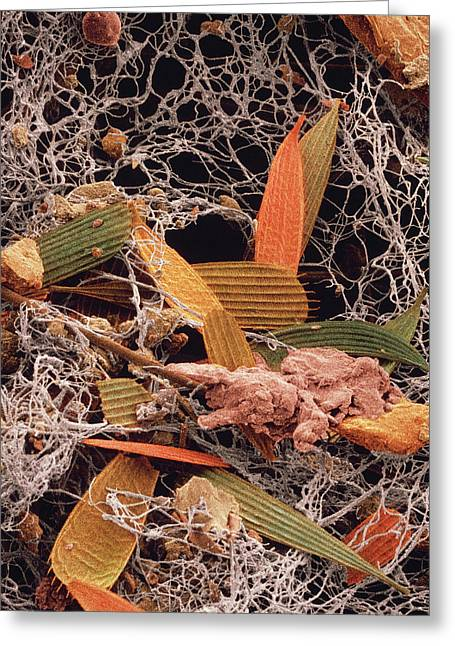 False-col Sem Of A Sample Of Household Dust Greeting Card
