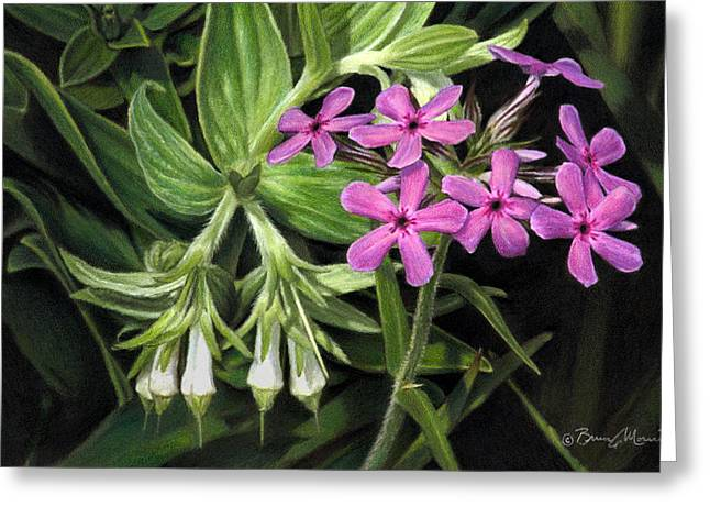 False Gromwell With Prairie Phlox Greeting Card