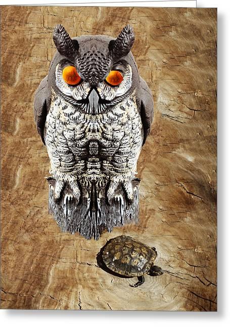 False Owl And Stuffed Turtle Greeting Card