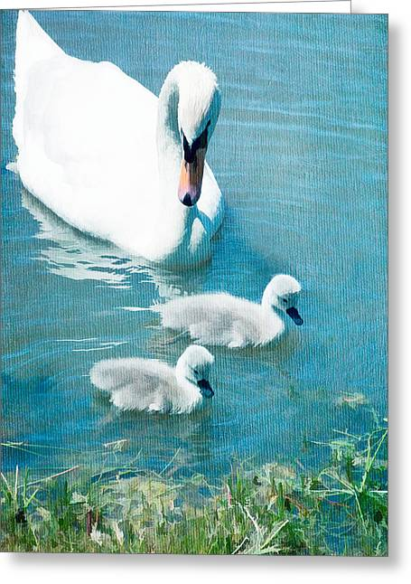 Family Of Swans At The Market Common Greeting Card by Vizual Studio